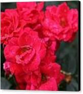 Wet Roses Canvas Print