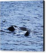 Whale 2 Canvas Print by Lorena Mahoney