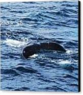 Whale Tail 3 Canvas Print by Lorena Mahoney