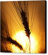 Wheat At Sunset Silhouette Canvas Print