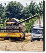 Wheat Harvest Canvas Print