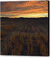 Wheat Stubble Sunset Canvas Print by Mike  Dawson