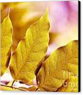 When The Leaves Turn Gold Canvas Print by Artist and Photographer Laura Wrede