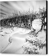 When The Wind Blows Canvas Print by John Farnan