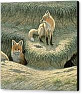 Where's Mom-fox Pups Canvas Print by Paul Krapf