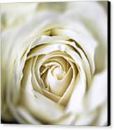 Whie Rose Softly Canvas Print by Garry Gay