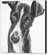 Whippet Black And White Canvas Print