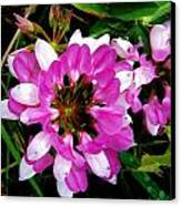 White And Purple Wildflower Canvas Print by Mark Malitz