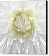 White Dahlia Floral Delight Canvas Print