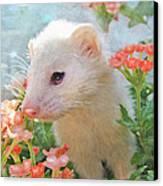 White Ferret Canvas Print