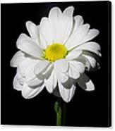 White Flower Canvas Print by Gennadiy Golovskoy
