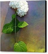 White Glory Canvas Print by George  Page