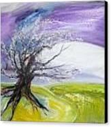 White Hope  Canvas Print by Rachel Thompson Schiff