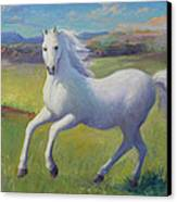 White Horse Canvas Print by Gwen Carroll
