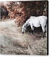 White Horse Canvas Print by Jelena Jovanovic