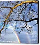 White Oak And Double Rainbow Canvas Print by Thomas R Fletcher