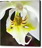 White Orchid Close 2 Canvas Print by Timothy Blair