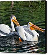White Pelicans Fishing For Trout Canvas Print by Kathleen Bishop