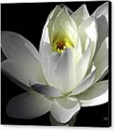 White Petals Aquatic Bloom Canvas Print by Julie Palencia