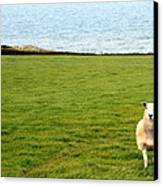 White Sheep In A Green Field By The Sea Canvas Print