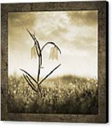 White Snakes Head Fritillary In Morning Dew Canvas Print