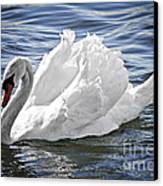 White Swan On Water Canvas Print by Elena Elisseeva