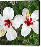 White Twin Hibiscus With Red Veriegation Canvas Print