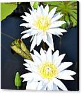 White Water Lilies Canvas Print by Jeannette Wagner