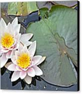 White Water Lilies Netherlands Canvas Print by Jelger Herder