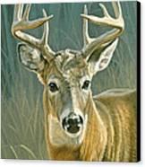 Whitetail Buck Canvas Print by Paul Krapf