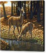 Whitetail Deer - Autumn Innocence 1 Canvas Print