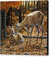 Whitetail Deer - Autumn Innocence 2 Canvas Print by Crista Forest