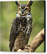 Whoos Watching Me Great Horned Owl In The Forest  Canvas Print by Inspired Nature Photography Fine Art Photography