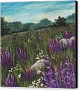 Wild Flower Field Canvas Print by Anastasiya Malakhova