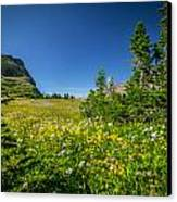 Wild Flowers Glacier National Paintedpark   Canvas Print by Rich Franco