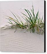 Wild Grass With Deep Roots 8x10 Canvas Print by Michael Flood
