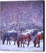 Wild Horse Christams Canvas Print by Jeanne  Bencich-Nations