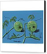 Wild Melon Canvas Print by N Ditsheko