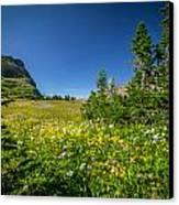 Wild Mountain Flowers Glacier National Park   Canvas Print