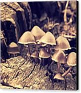 Wild Mushrooms Canvas Print by Amanda Elwell