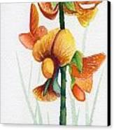 Wild Orchid Canvas Print by Carolyn Weir