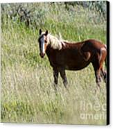 Wild Palomino Canvas Print by Sabrina L Ryan