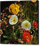 Wild Poppies Canvas Print by Helen Carson