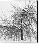 Wild Springtime Winter Tree Black And White Canvas Print by James BO  Insogna