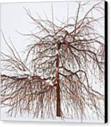 Wild Springtime Winter Tree Canvas Print by James BO  Insogna