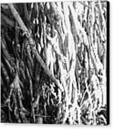 Wild Surface Roots Canvas Print by Sandra Pena de Ortiz
