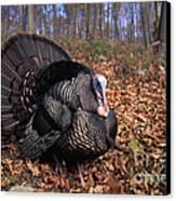 Wild Turkey Displaying Canvas Print by Len Rue Jr