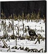 Wild Turkey In The Corn Canvas Print by Thomas Young