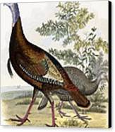 Wild Turkey Canvas Print by Titian Ramsey Peale