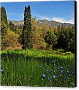 Wildflower Meadow At Descanso Gardens Canvas Print by Lynn Bauer